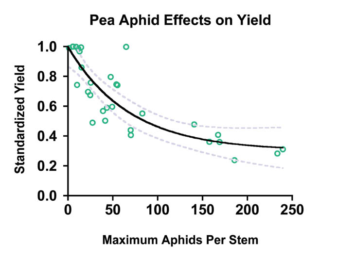 Pea aphid yield loss